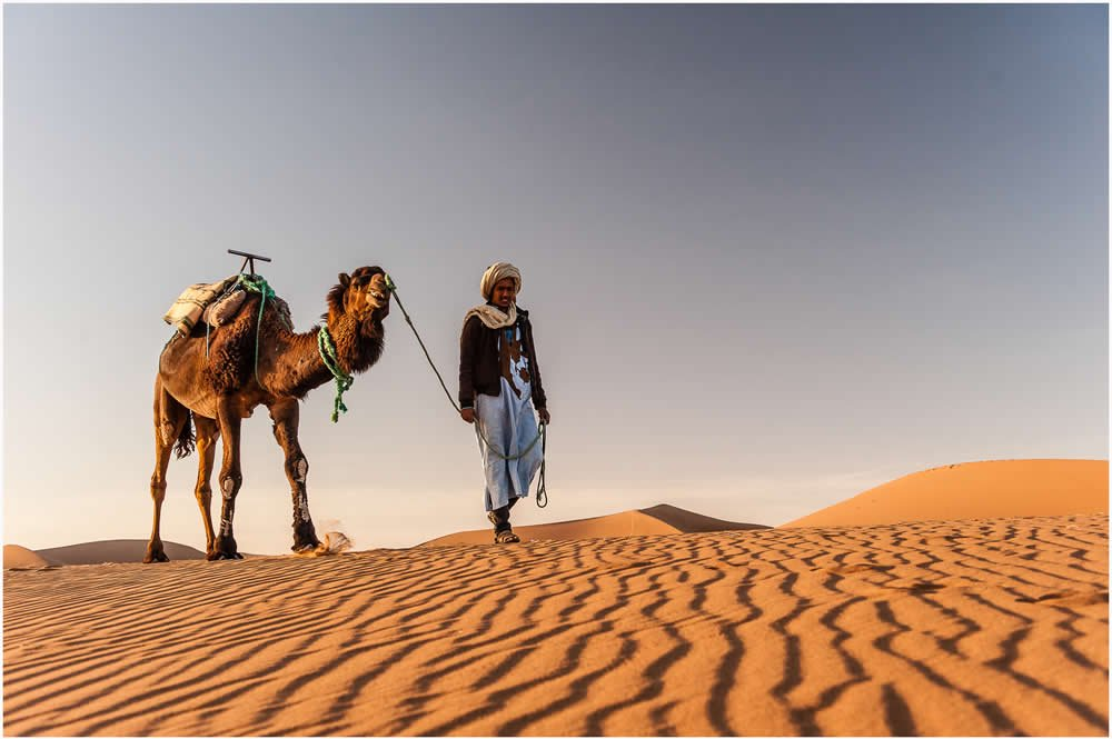 camels-in-morocco-www.moroccanjourneys.com