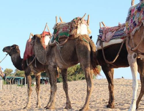 Morocco Camel Trek- Atlantic Beach Tour