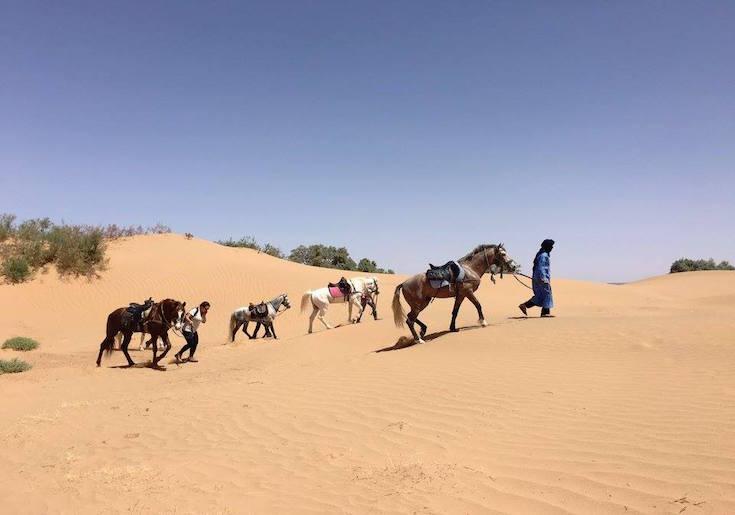 merzouga camel trek and horse trek morocco