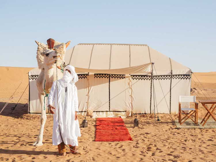 Berber Travel Guide with Camel at Camp in the Sahara Desert, Morocco