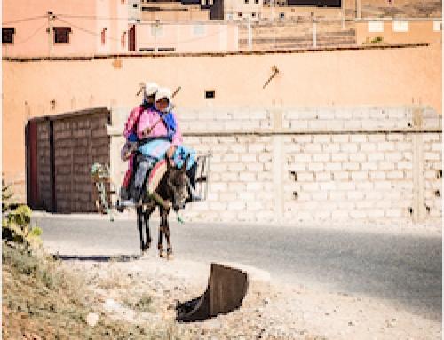 Surf & Berber Culture