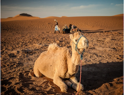 Merzouga Desert Camel & Horse Trek