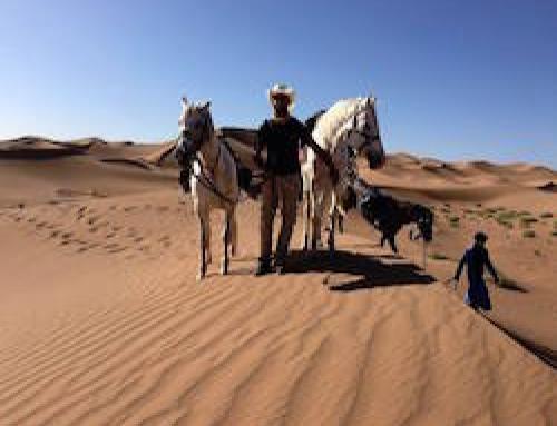 Sahara Horse Trekking