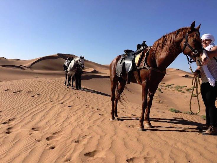 sahara horse trekking morocco
