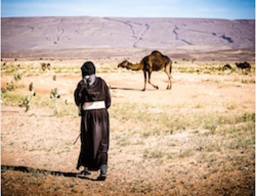 Nomadic Sahara Tour