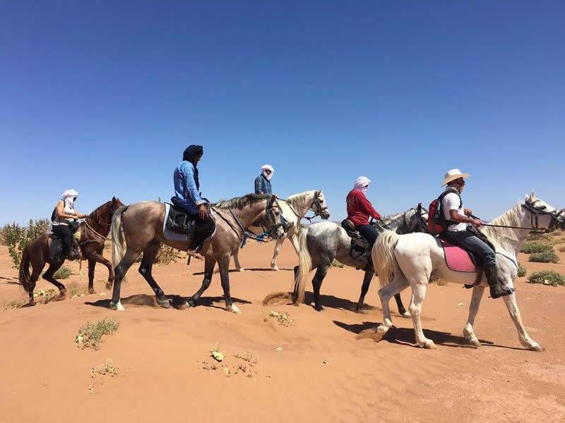 morocco camel trekking and horse trekking sahara