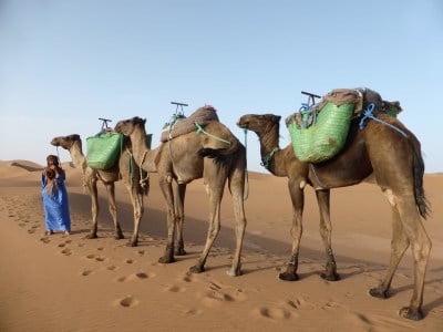 camel-trek-morocco