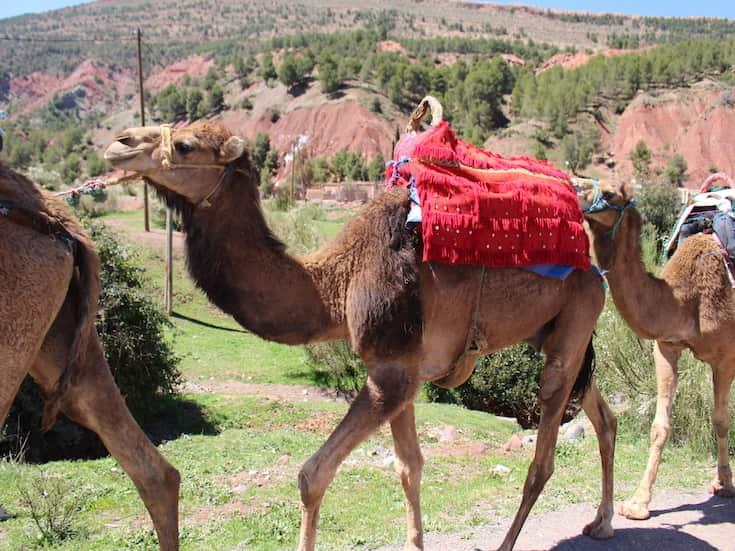 atlas-mountains-tour-www.moroccanjourneys.com