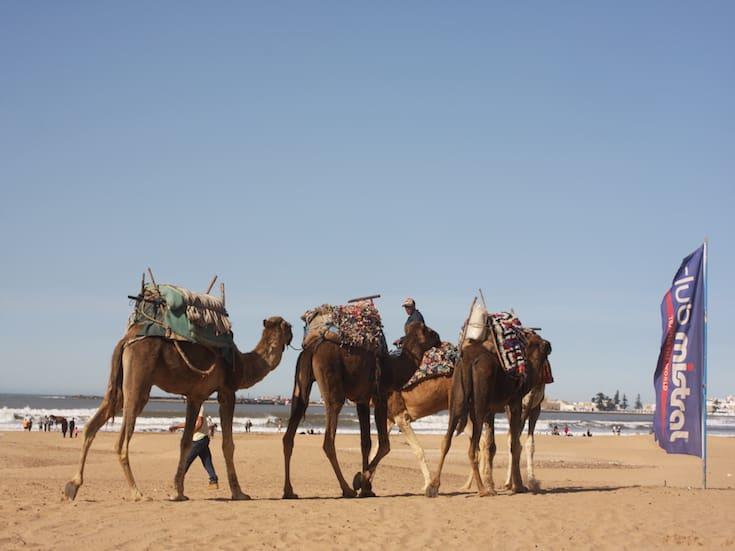camel-trekking-essaouira-www.moroccanjourneys.com
