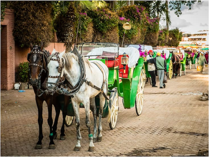 Private Horse-Drawn Carriages in Marrakech