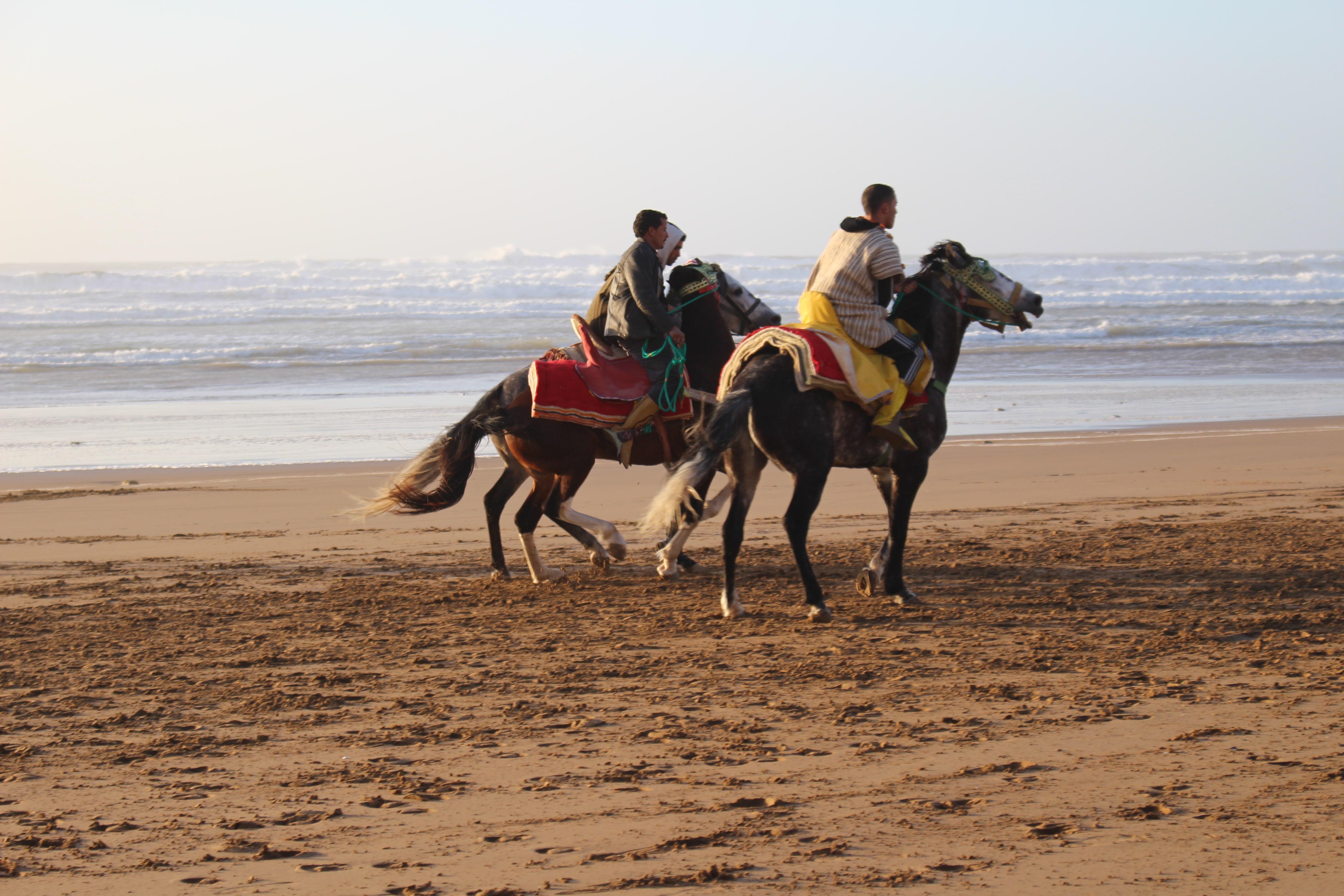 morocco-tours-fantasia-festival-www.moroccanjourneys.com