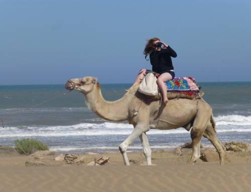 Camel Treks- Morocco